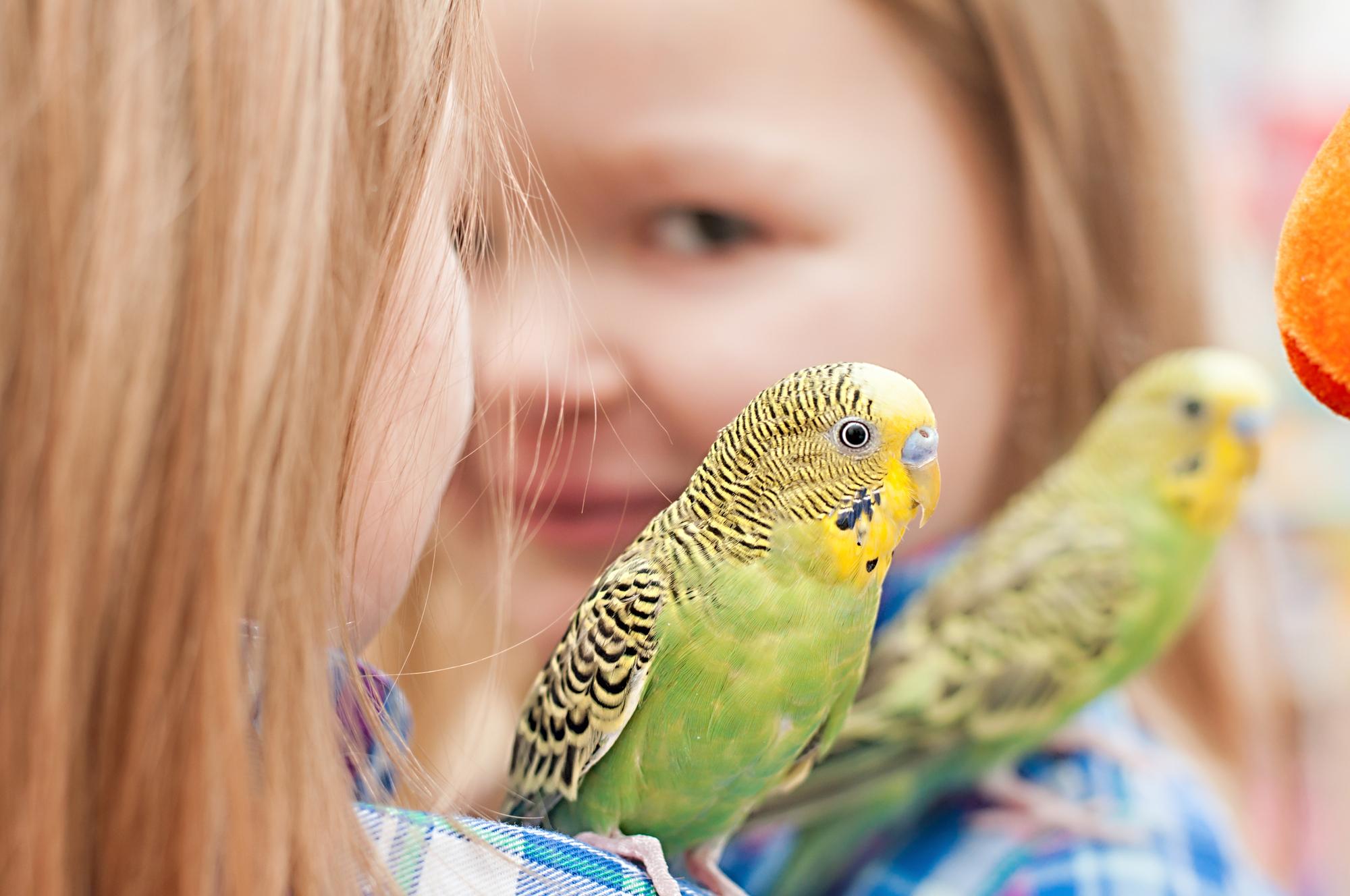 Улетел попугай: как найти и поймать?