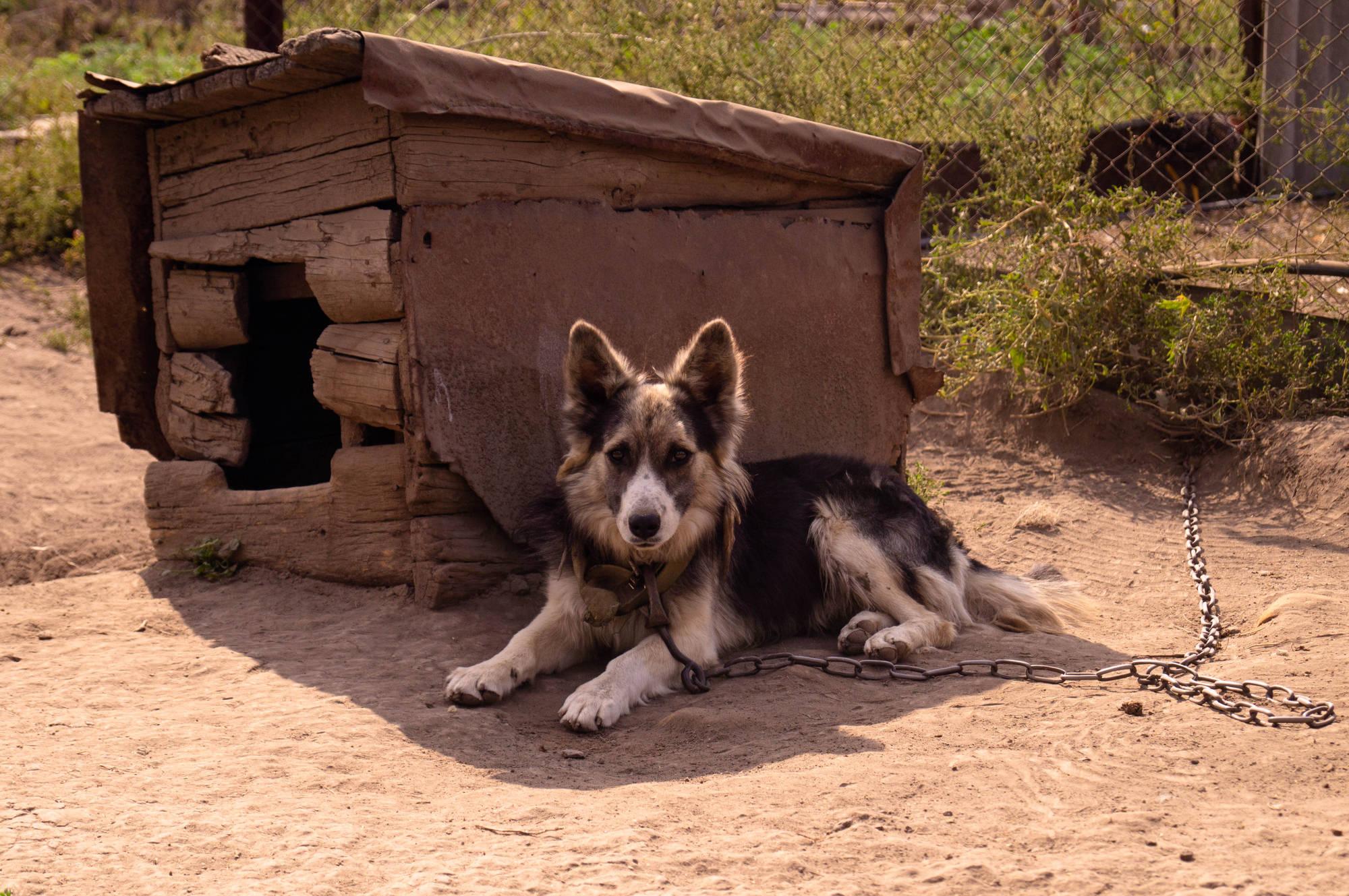 Куда и как написать заявление о жестоком обращениии с животными?