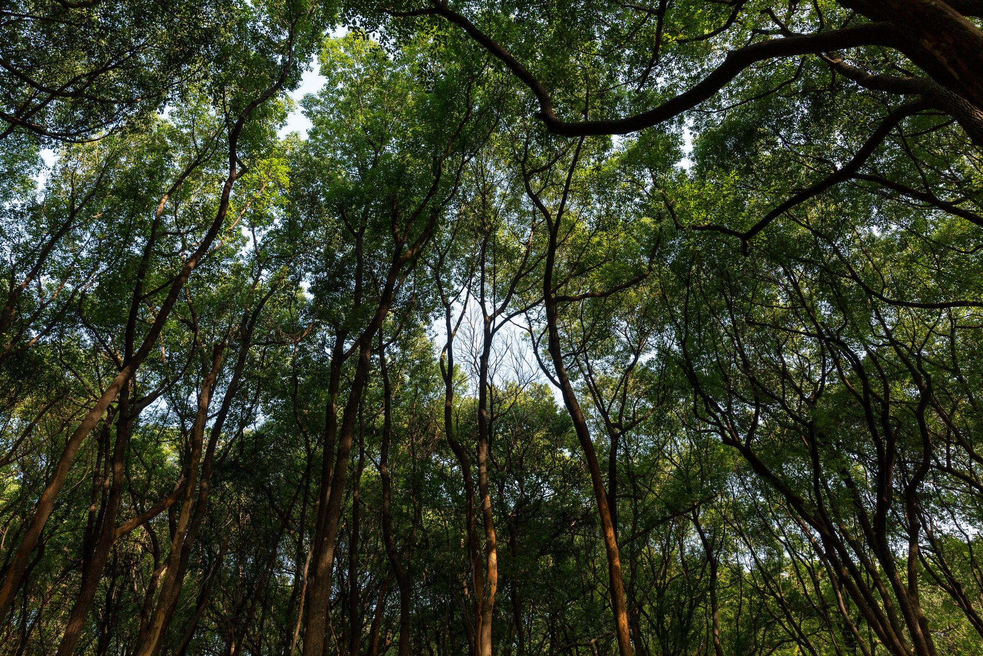 Что же делать, если довелось заблудиться в лесу?