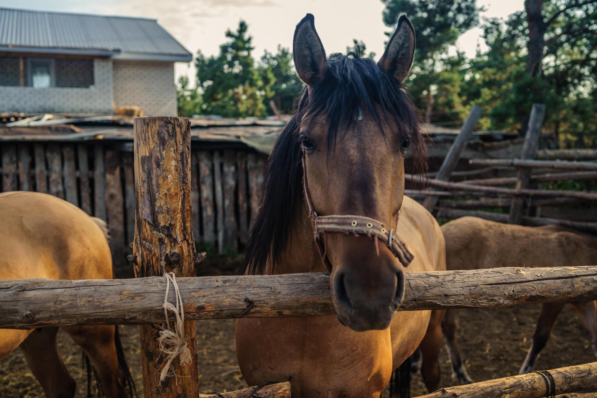 Как найти и поймать убежавшую лошадь?