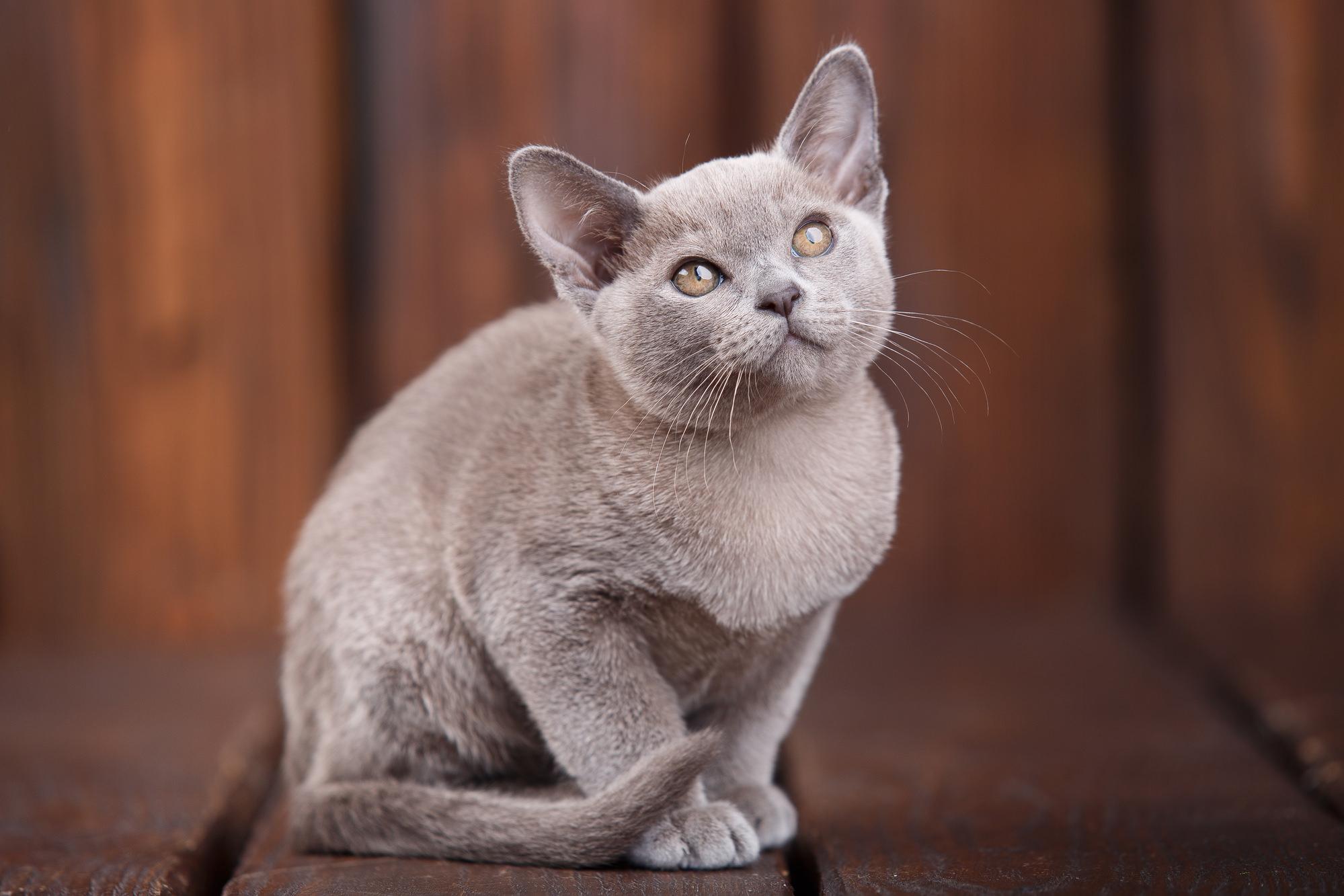 Как поймать испуганного кота или испуганную собаку?