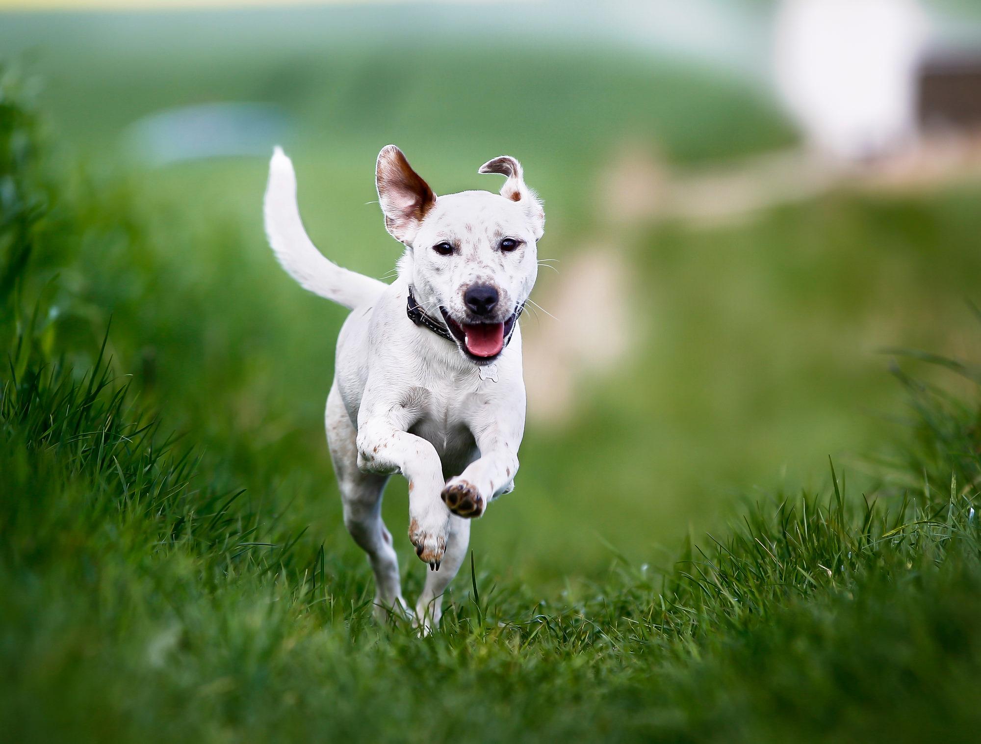 Как найти собаку, которая убежала?