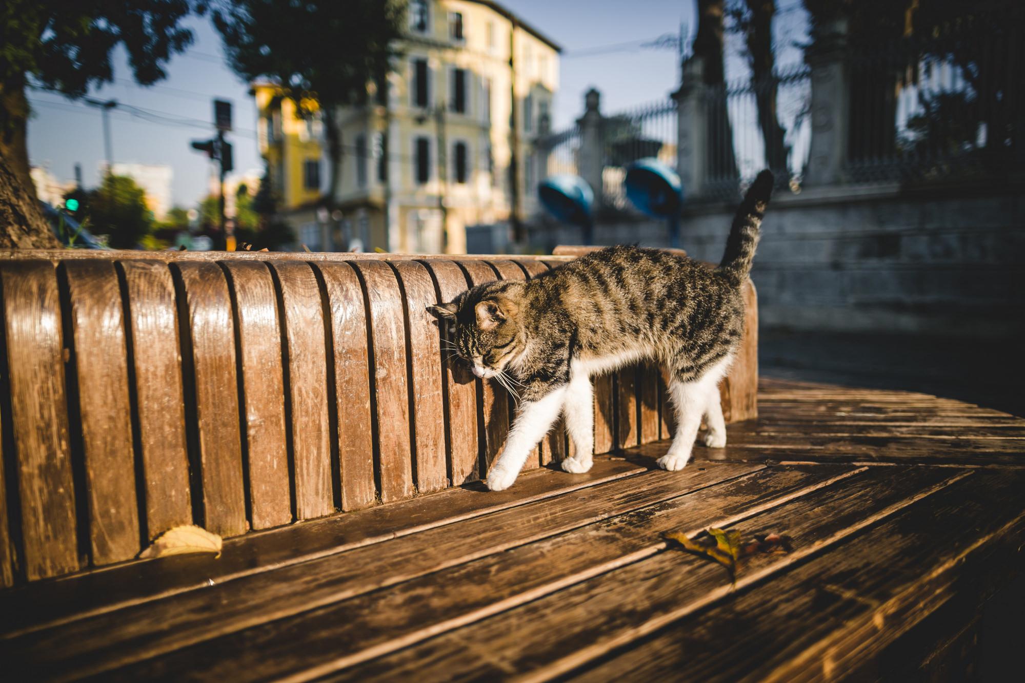 Как найти кошку, которая убежала?